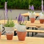 lavender-1506506