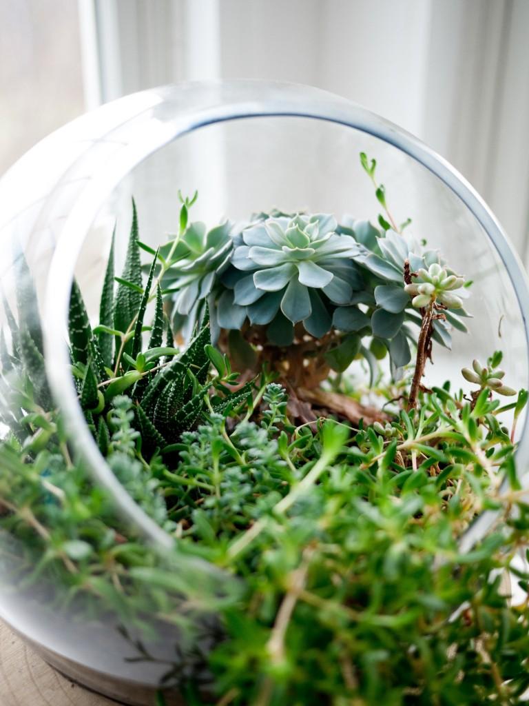succulents-569357